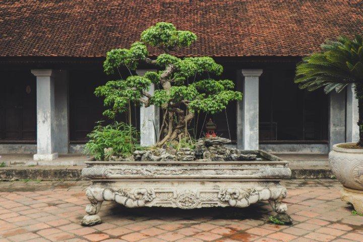 Bonsai boompje groeien