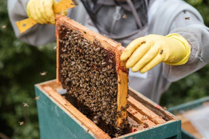 imker bijen houden