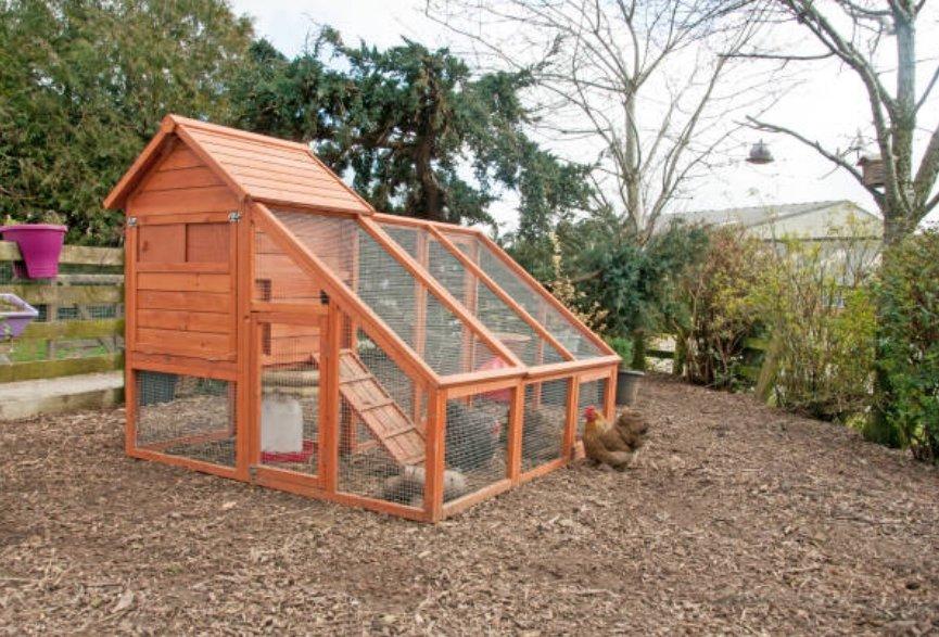 Kippenhok bouwen