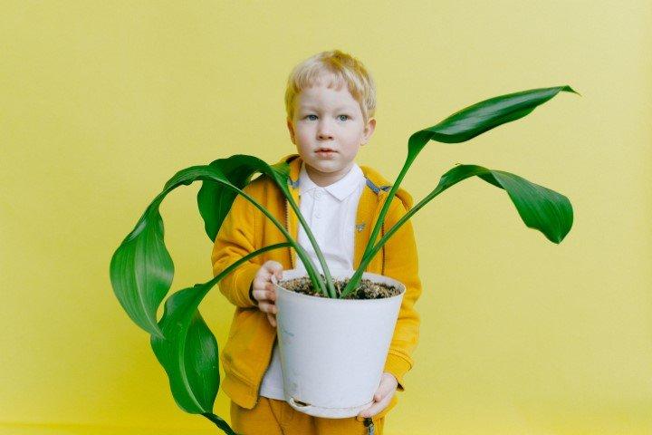 Plant hobby jongen